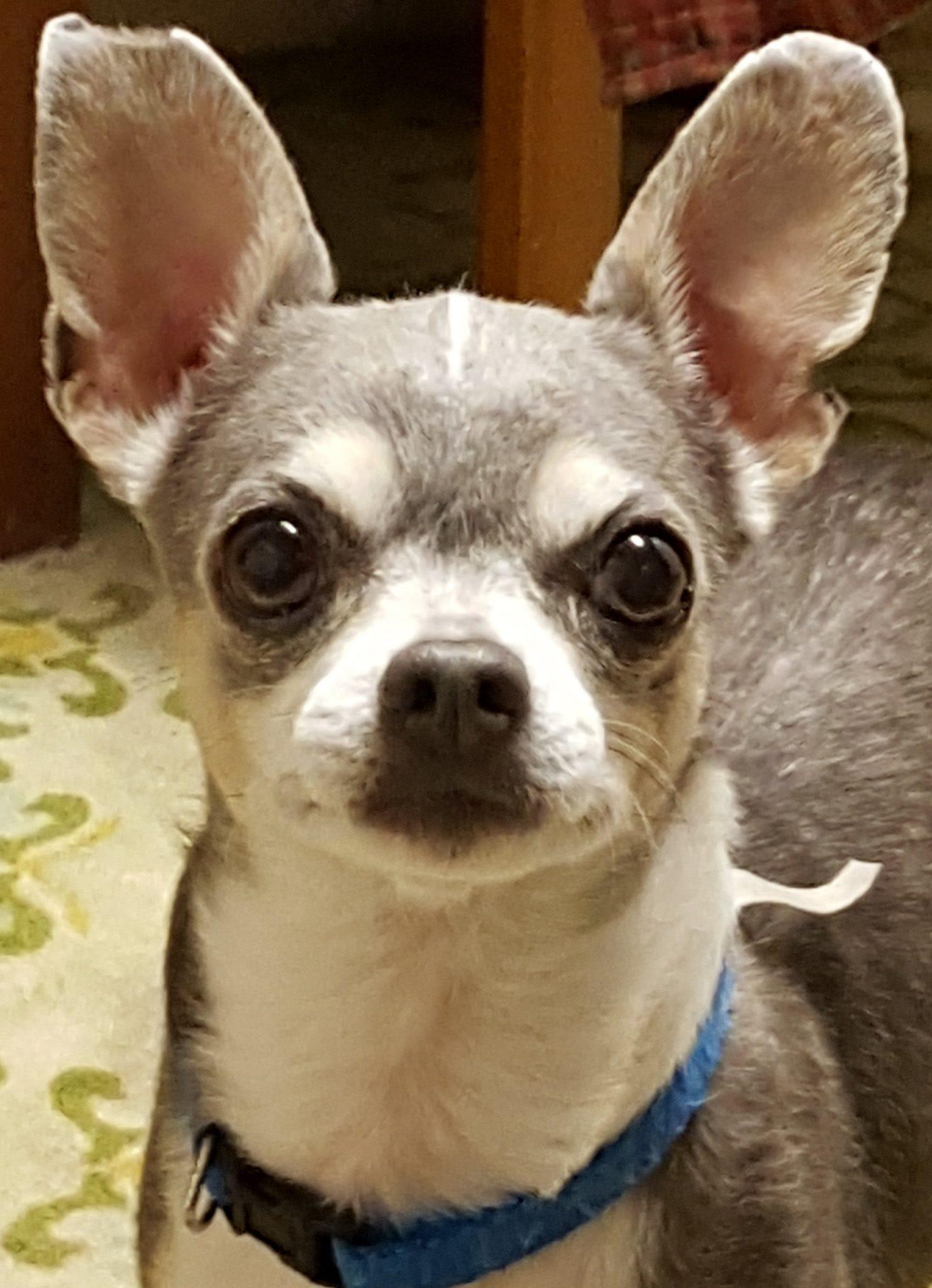 Senior Dog Rescue In Delaware